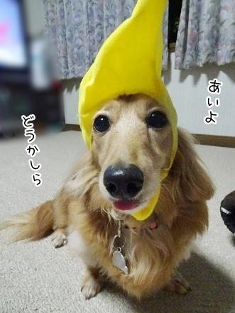 kinako7784.jpg