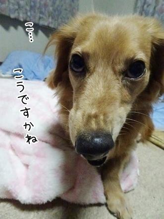 kinako7919.jpg