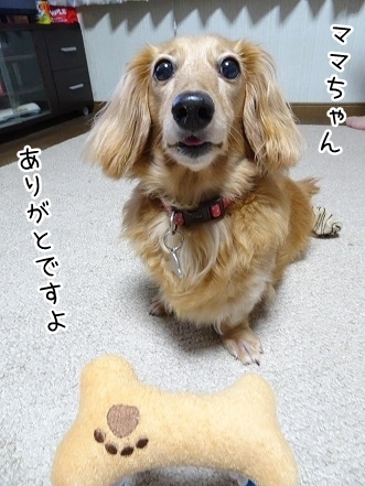 kinako7933.jpg