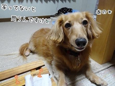 kinako7988.jpg