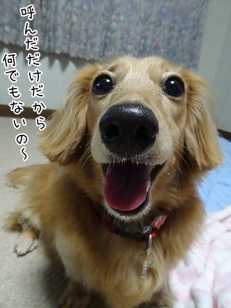 kinako7996.jpg