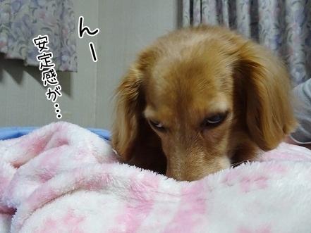 kinako8000.jpg