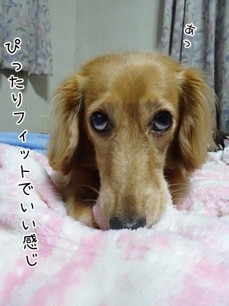kinako8001.jpg