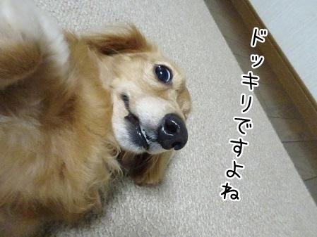 kinako8006.jpg