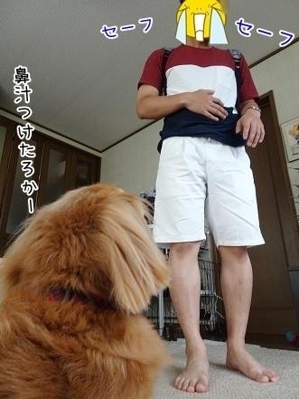 kinako8008.jpg