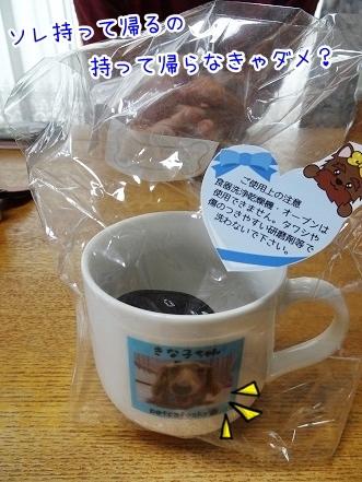 kinako8011.jpg