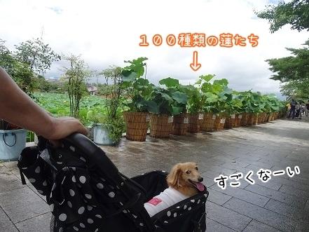 kinako8015.jpg