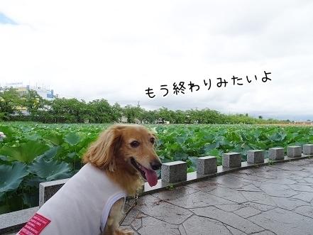 kinako8016.jpg