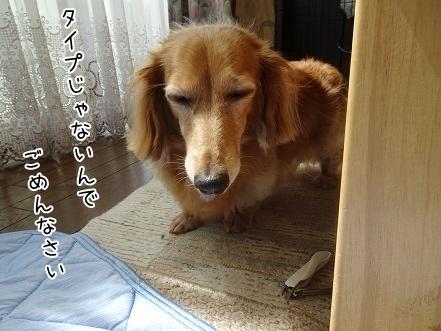 kinako8100.jpg