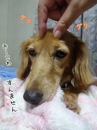 kinako8111.jpg