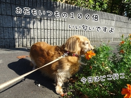 kinako8147.jpg