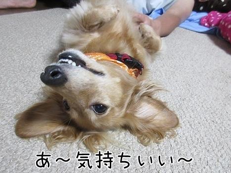 kinako8183.jpg