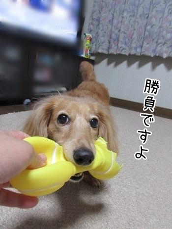 kinako8187.jpg