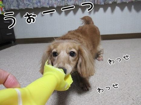 kinako8188.jpg