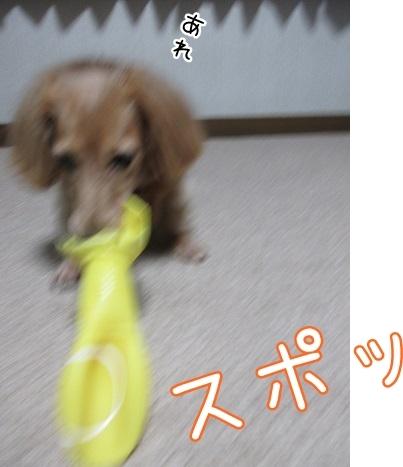 kinako8189.jpg