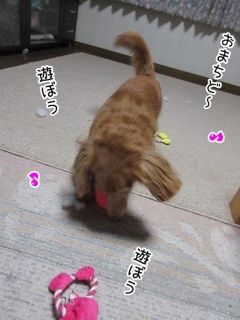 kinako8237.jpg