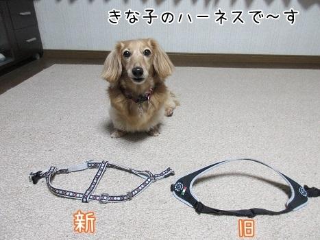 kinako8240.jpg