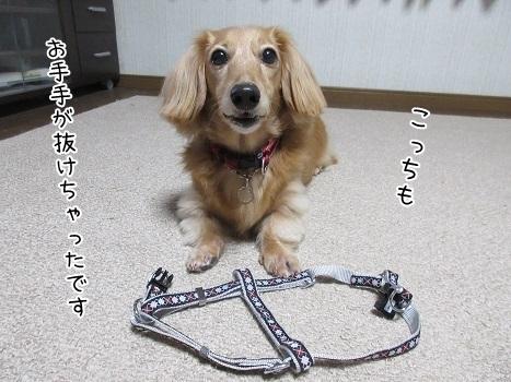 kinako8242.jpg