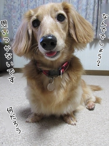 kinako8243.jpg