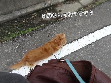kinako8247.jpg