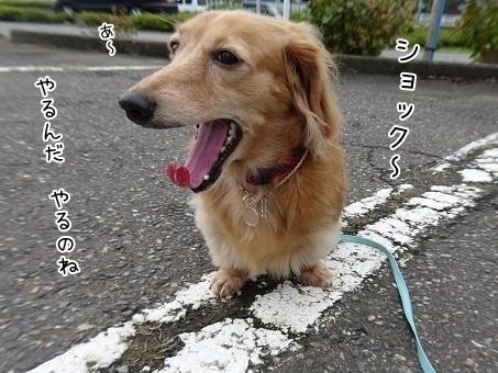 kinako8250.jpg