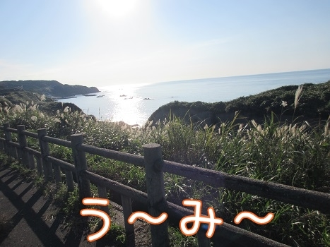 kinako8252.jpg