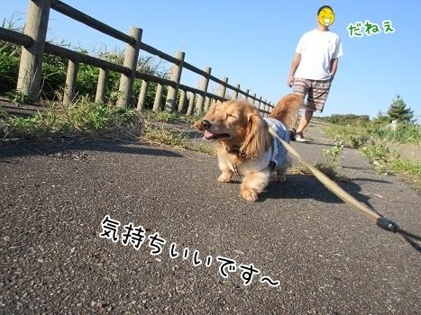 kinako8253.jpg