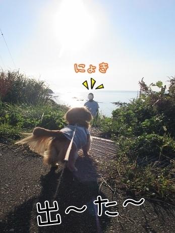 kinako8255.jpg