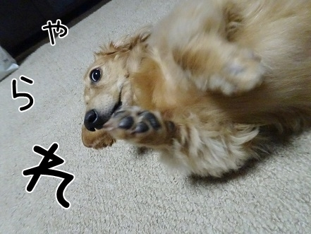 kinako8258.jpg
