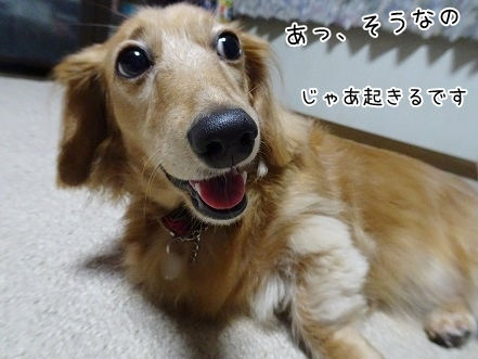 kinako8260.jpg