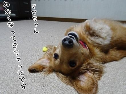 kinako8263.jpg