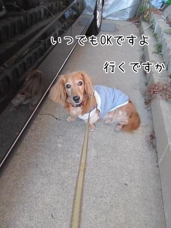 kinako8269.jpg