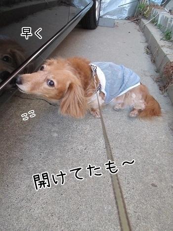 kinako8270.jpg