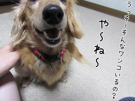 kinako8271.jpg