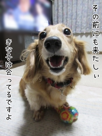 kinako8275.jpg