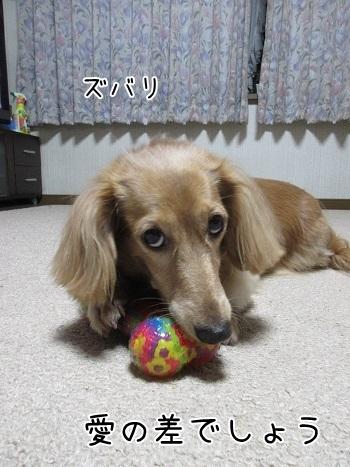 kinako8276.jpg