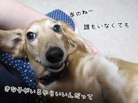 kinako8280.jpg