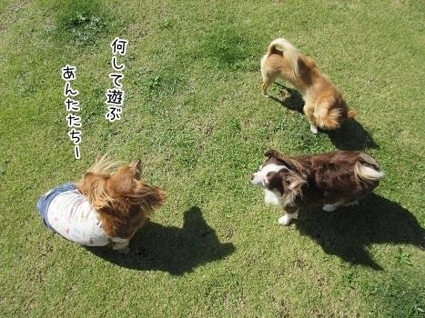 kinako8286.jpg