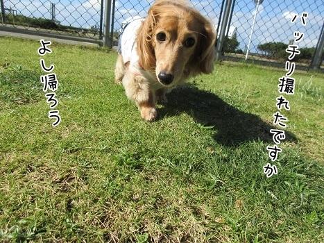 kinako8287.jpg