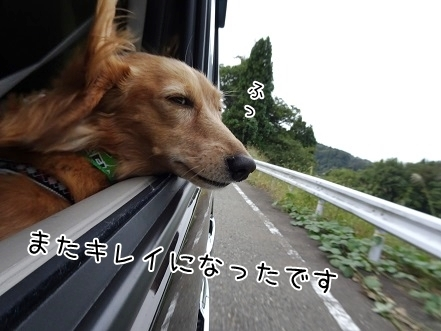 kinako8289.jpg