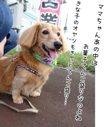 kinako8291.jpg