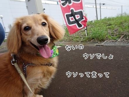 kinako8292.jpg