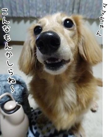 kinako8302.jpg