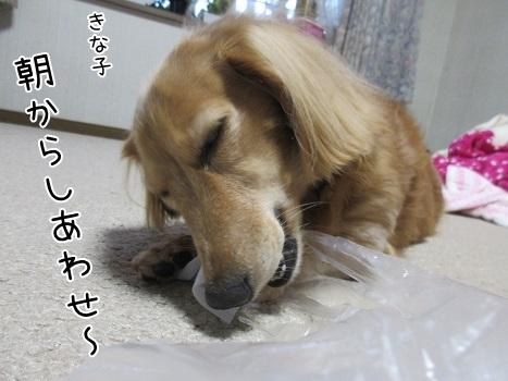 kinako8308.jpg