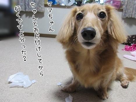 kinako8310.jpg