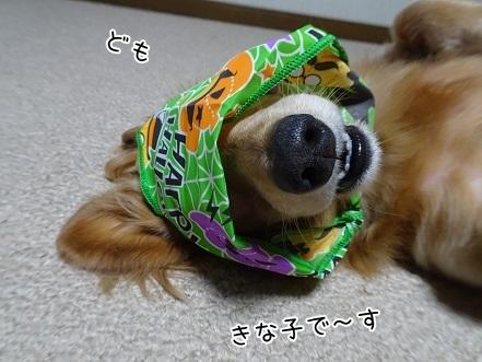 kinako8312.jpg