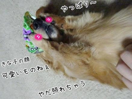kinako8313.jpg