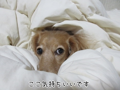 kinako8317.jpg