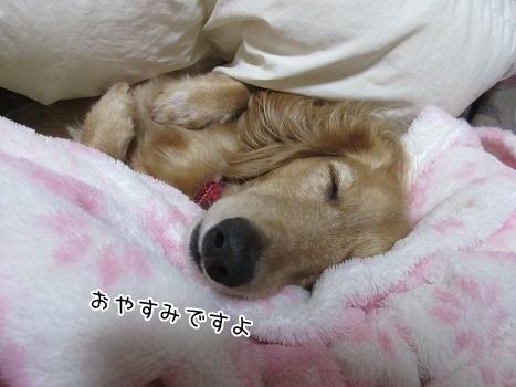 kinako8319.jpg