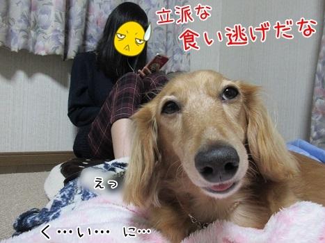 kinako8324.jpg